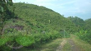 Keadaan Dusun Melian yang masih kelihatan hijau di musim penghujan saat ini