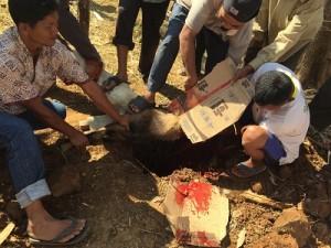 Penyembelihan kambing qurban di Pesantren Darush Sholihin